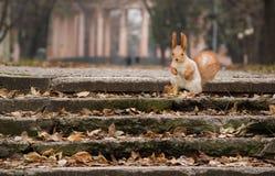 Écureuil en stationnement Photo stock