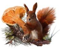 Écureuil et une chanterelle de champignon Photographie stock
