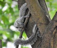 Écureuil jouant le cache-cache photos stock