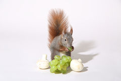 Écureuil mignon Photos stock