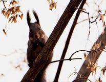 Écureuil mignon Images stock