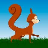 Écureuil orange de vecteur sur le fond Images libres de droits