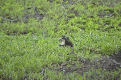 Écureuil pour la nourriture Photographie stock libre de droits