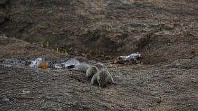 Écureuil priant pour la mère 8 photo stock