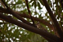Écureuil réclamant le compagnon Photographie stock libre de droits