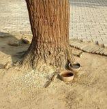 Écureuil s images libres de droits