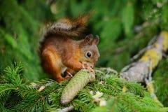 Écureuil se reposant sur un arbre Photographie stock libre de droits