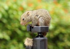 Écureuil sur des trépieds photographie stock