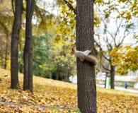 Écureuil sur l'arbre Image stock