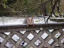 Écureuil sur la barrière Images stock