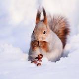 Écureuil sur la neige Photo stock