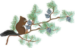 Écureuil sur le branchement vert de pin d'isolement sur le blanc illustration libre de droits
