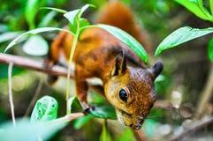 Écureuil sur un arbre Photos stock
