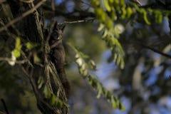 Écureuil sur un arbre Photo stock