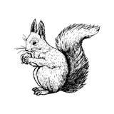 Écureuil tiré par la main Croquis de vecteur illustration de vecteur