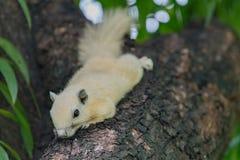 écureuils Images libres de droits