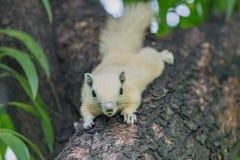 écureuils Image libre de droits