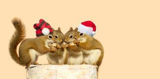 Écureuils de Noël. image libre de droits