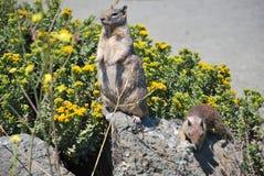 Écureuils et fleurs Photos libres de droits