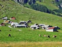Écuries et fermes sur des pâturages de bétail de la vallée d'Urner Boden image stock