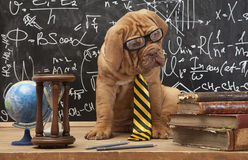 Éducation de chien Photos stock