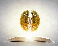 Éducation de lecture et d'individu Photo libre de droits