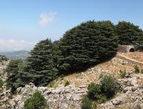 Église antique dans la plantation de cèdre, Liban Photographie stock libre de droits