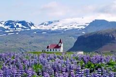 Église des montagnes et du Lupines Photographie stock libre de droits