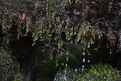 Égouttements de l'eau Image stock