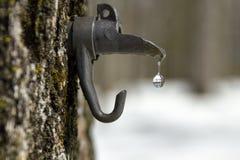 Égoutture de l'eau d'érable d'un bec au ressort, Photo libre de droits