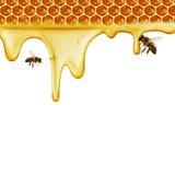 Égoutture de miel sur le fond de nid d'abeilles Image libre de droits