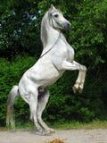 Égua Fotos de Stock