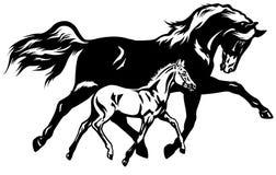 Égua com branco do preto do potro Fotografia de Stock Royalty Free
