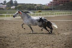 Égua e seu potro no prado Imagens de Stock Royalty Free