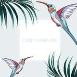 Élégants floraux invitent le design de carte : palmettes tropicales et oiseaux roses de paradis illustration de vecteur
