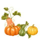 Élément de conception avec des potirons Ornement décoratif des légumes et des feuilles illustration stock