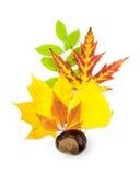 Élément de conception d'automne/belles lames réelles Photos libres de droits