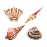 Élément de coquillage pour des aquariums de décoration, coquille sous-marine dans le concept nautique Photos libres de droits