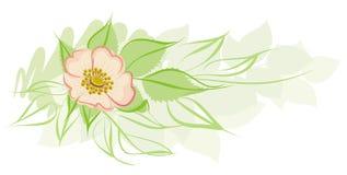 Élément floral Image libre de droits