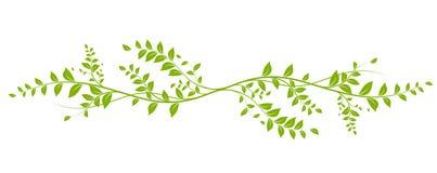 """Résultat de recherche d'images pour """"liane verte"""""""