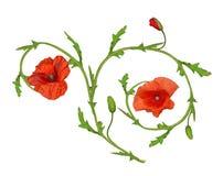 Élément rouge d'ornement de fleur de pavot sur le blanc illustration de vecteur