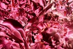 Éléments abstraits de fractale pour votre conception Photos stock