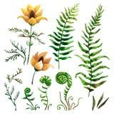 Éléments botaniques d'aquarelle Photos libres de droits