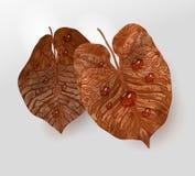 Éléments brun-jaunes réalistes de feuille avec des baisses de l'eau, rosée élément de feuille de vecteur d'isolement pour la conc illustration de vecteur