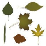 Éléments d'automne pour la conception Images libres de droits