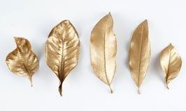 Éléments d'or de conception de feuille Éléments de décoration pour l'invitation, cartes de mariage, jour de valentines, cartes de photos libres de droits