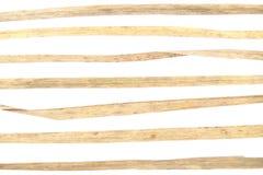 Éléments d'herbe sèche pour la conception graphique sur le fond blanc Image stock