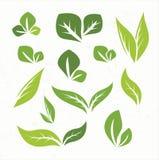 Éléments de conception de feuilles de vert Images libres de droits