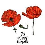 Éléments de conception de fleurs de pavot Image libre de droits