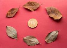 Éléments de conception pour l'automne Bitcoin d'or et feuilles tombées en cercle forment Photos libres de droits